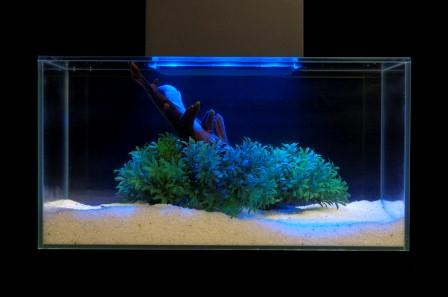 Review fluval edge 6 gallon aquarium with 21 led light for Black light for fish tank