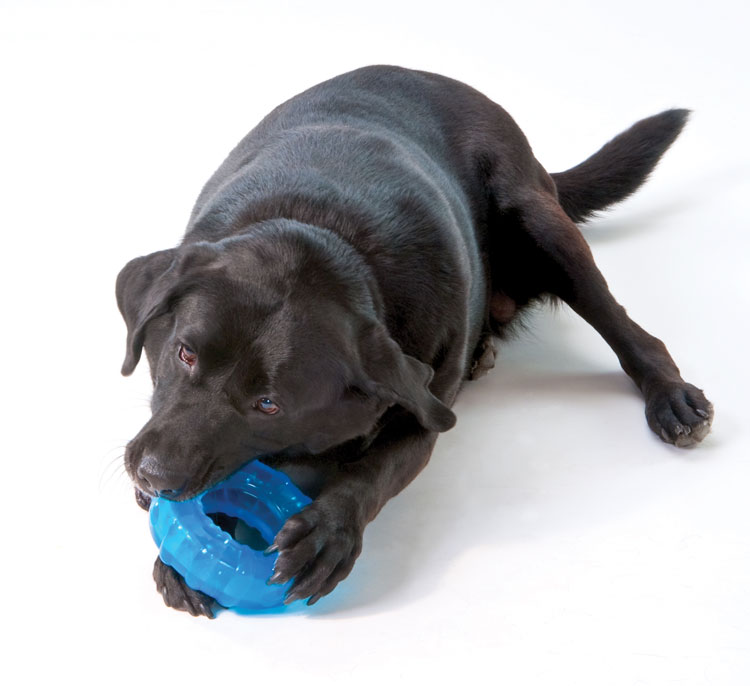 Pet Supplies : Pet Chew Toys : Petstages ORKA Dog Tire : Amazon.com