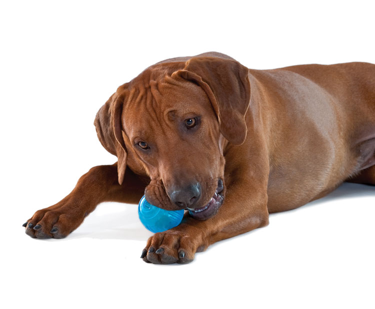 Pet Supplies : Pet Toy Balls : Petstages ORKA Tennis Dog Ball : Amazon ...