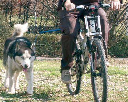 Walky Dog  Installation