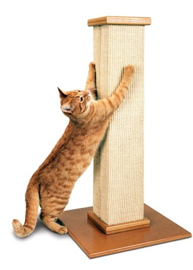 Choosing a Scratching Post