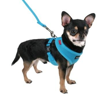 Dog Walking Training Head Harness Australia