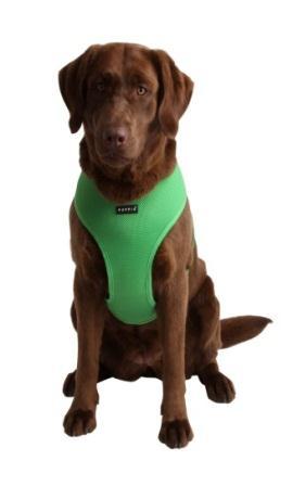 Dog Walk Training Harness Amazon