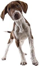 PupPeroni Hound Puppy