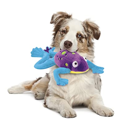 Collie with toy
