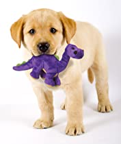 Puppy with toy