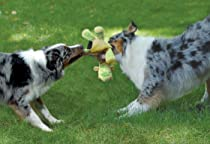 Dogs tug of war with toy
