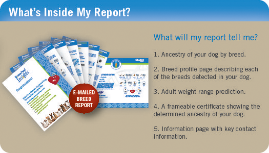 WhatsInsideMyReport WP 2. SL550  Wisdom Panel 2.0 Breed Identification DNA Test Kit