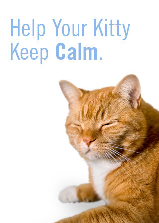 Help Your Cat Keep Calm