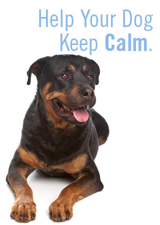 Help Your Dog Keep Calm
