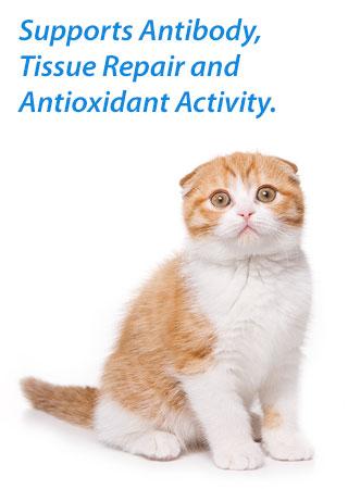 Otc uti medication for cats