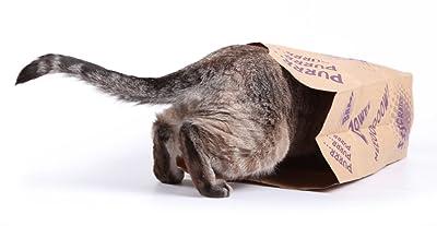 Cartoon cat in cave bag