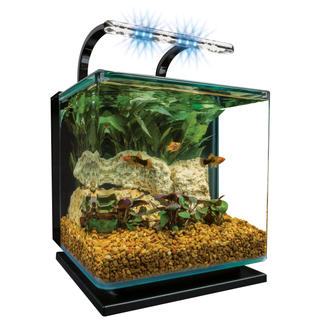 Contour lifestyle for 5 gallon glass fish tank