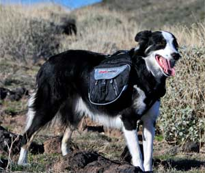 EzyDog Summit Backpack