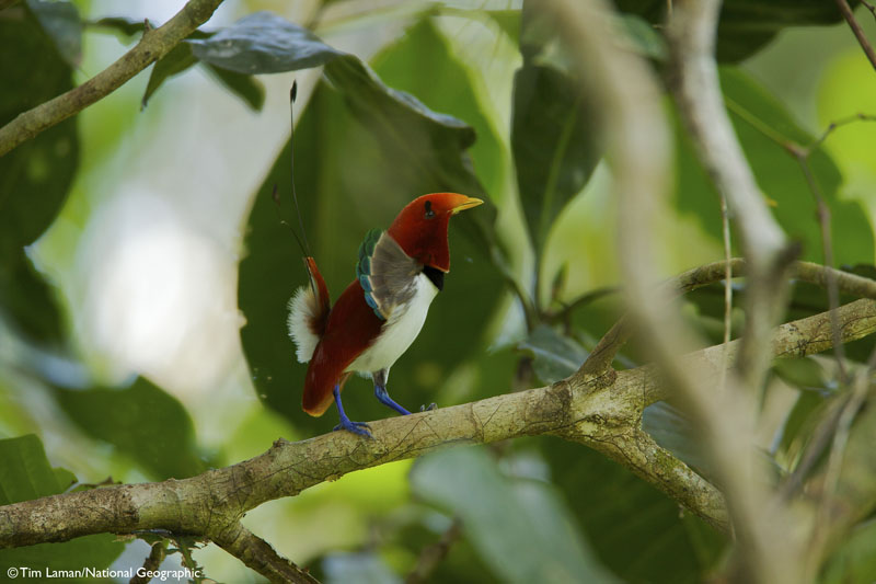 http://g-ec2.images-amazon.com/images/G/01/books/rando-ems/BirdsOfParadise-06._V389833667_.jpg