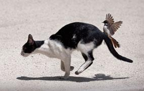 Angry Birds: Bird Chasing Cat
