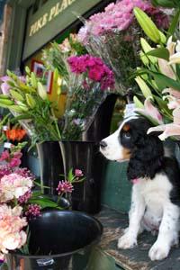 Skylark Flowers