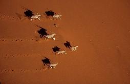 http://g-ec2.images-amazon.com/images/G/01/dvd/aplus/planetearth/planetearth-herd-831180-sm.jpg