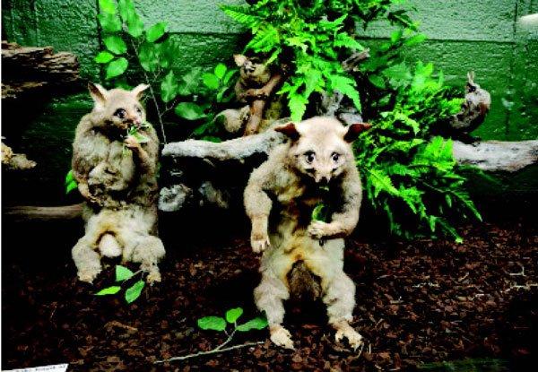 Secret Life of Opossums