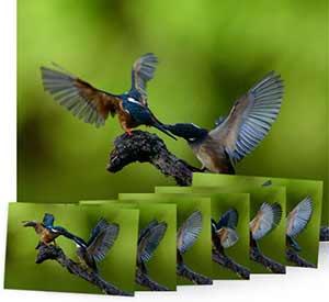 Nikon D610 fotos de aves en vuelo que muestra el rendimiento AF.
