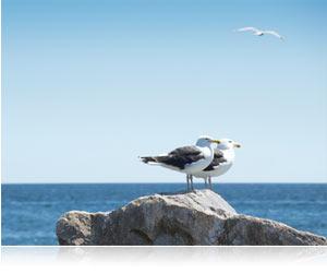 COOLPIX S800c 10x zoom photo of seagulls on jetties