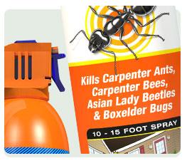 Outdoor Ant Killer