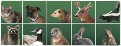 Deer, Dogs, Cats, Raccoons, Skunks, Opossum, Birds, Rabbits, Squirrels and more!