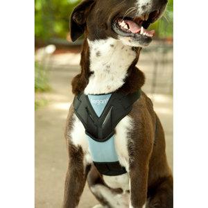 Dog Auto Harness