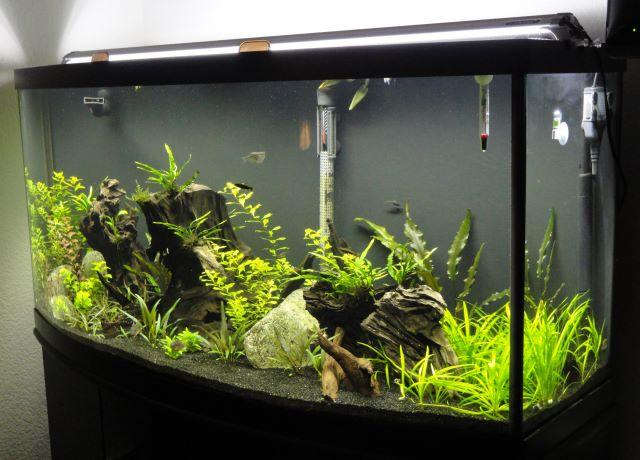 Aquarium Lights Amazon Com Finnex Ray2 Aquarium Led