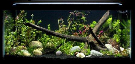 Finnex fugeray aquarium led light plus for Amazon fish tank