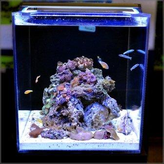 Led Reef Light Amazon Com Finnex Ray2 Aquarium Day