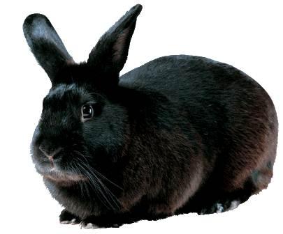 Kaytee Rabbit