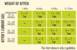 Ratio Cat Food When Switching