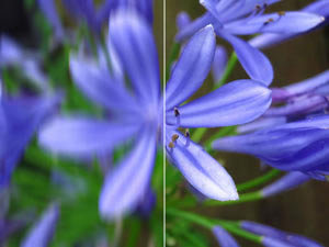 Beat the blur with Intelligent optical Image Stabilize