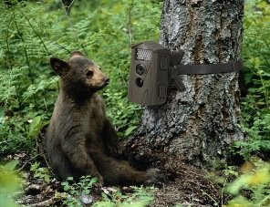 infrarot wild berwachungs kamera video jagd fotofalle technaxx nature cam tx 09 ebay. Black Bedroom Furniture Sets. Home Design Ideas
