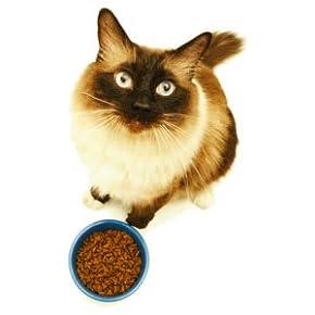 Bis -33%: Katzenfutter & Snacks