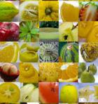 フルッティア旬の厳選フルーツ