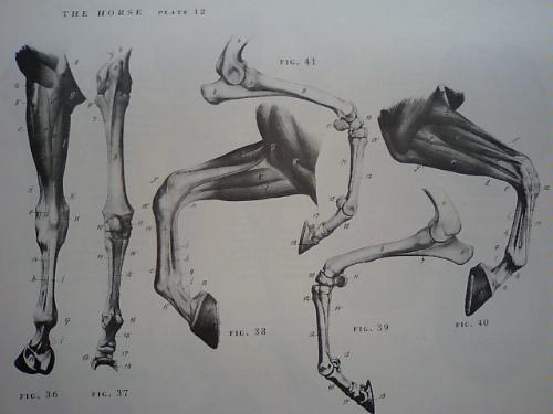 Artistic Anatomy Robert Beverly Hale Pdf Merger 2524a1909fa0d0bc972b3210.L