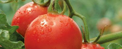 夏しぼり津南トマトジュース