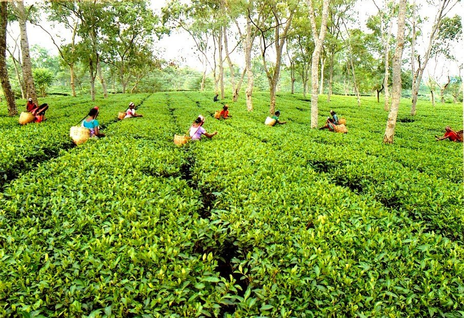Newby Assam Black Tea, 25 Tea Bags