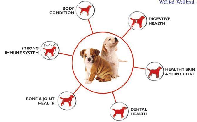 Buy Drools Large Breed Adult Premium Dog Food 3kg Online