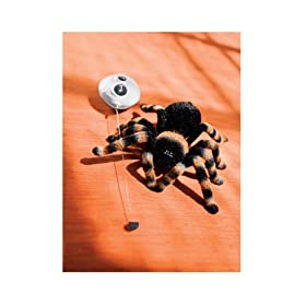 417hCb OvcL. AA280  Screamy Tarantula Remote Control