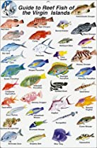 Fish Identification Cards - Reef Fish - British Virgin Islands - 9 x 6